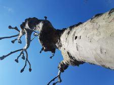 Stump #108, on Gladding Road, Manor Park, E12