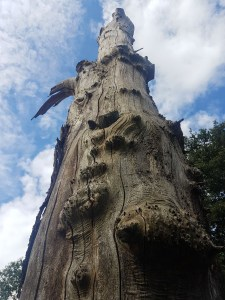 the original Stump #123 photographed in Wanstead Park