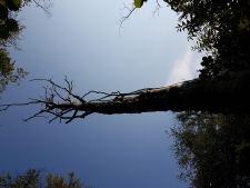 Original photo for Stump #138 (Ash Dieback I)
